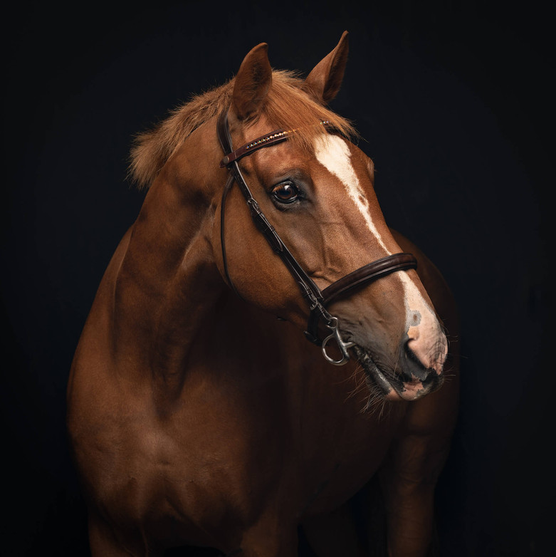 Horse photography Nikki.jpg