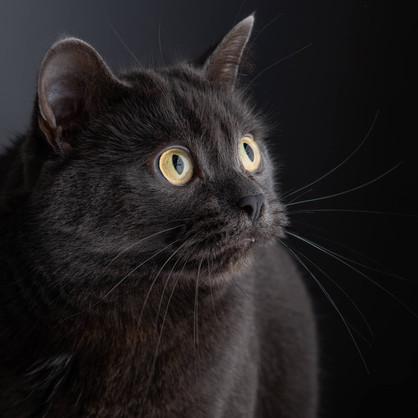 Cat photography Nikki.jpg