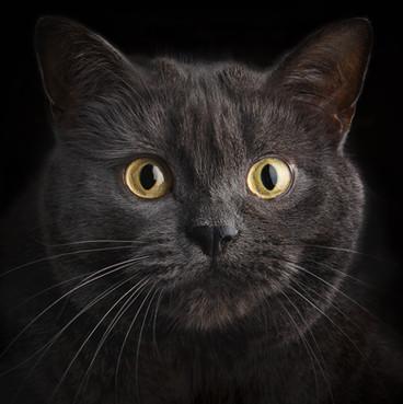 Cat feline photography.jpg