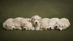 003_sussex_puppy_dog_photographer.jpg