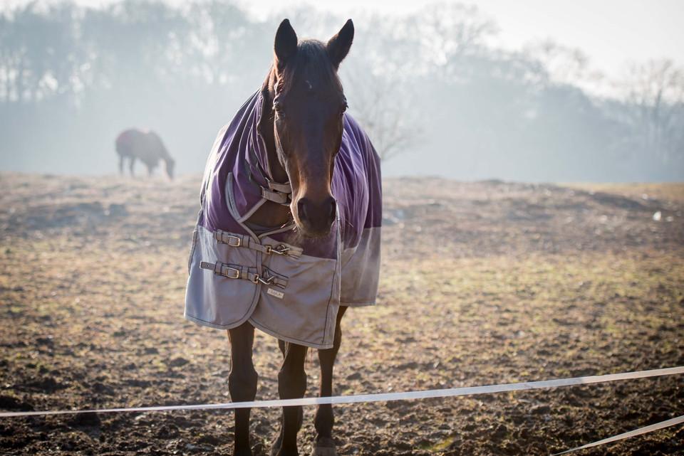 001_sussex_horse_photographer.jpg