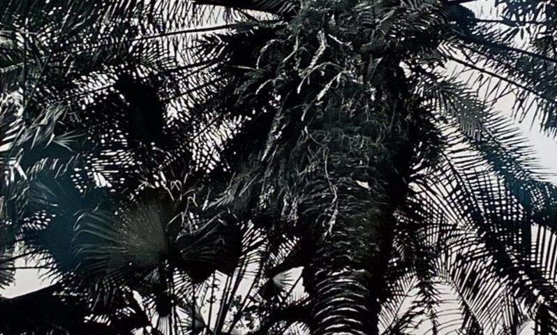 Photograph-B&W Palm Tree