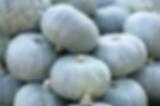 grey squash.png