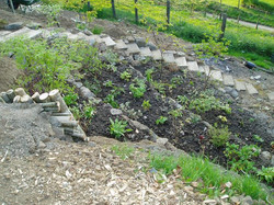 Planting the terraces