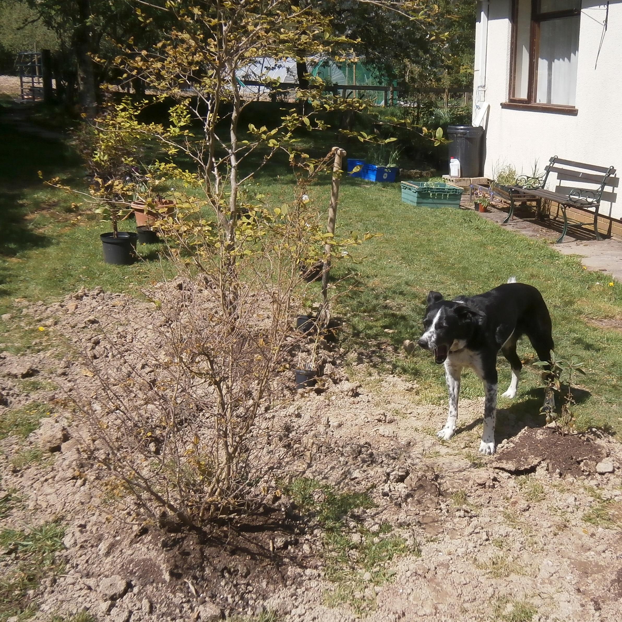 Yawn, she's gardening again.