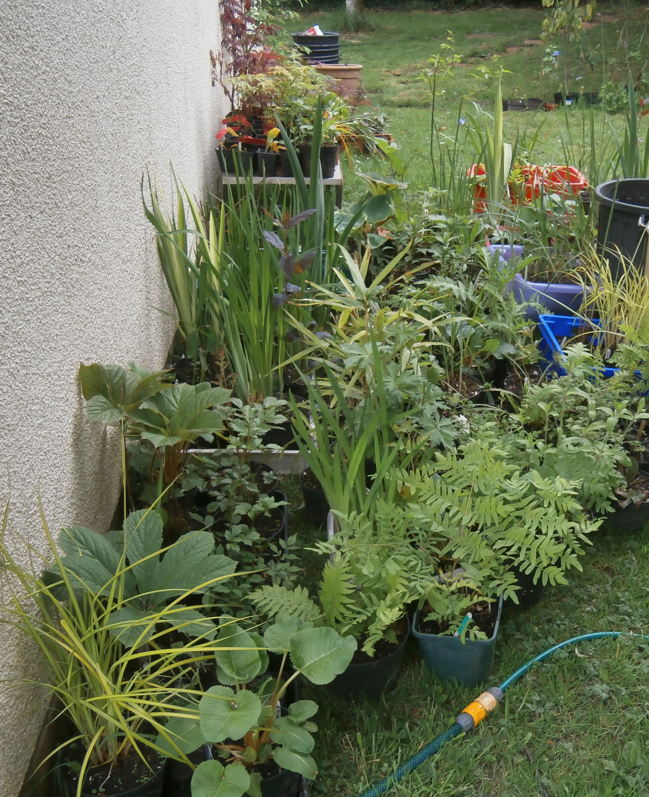 Pond and bog plants