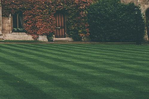 Premium Lawn
