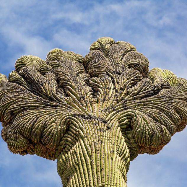 cacti1.jpg
