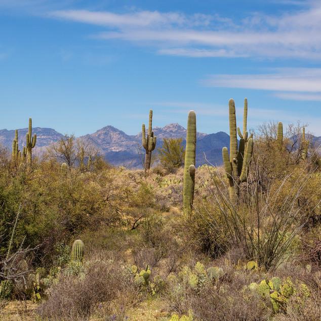 Cacti AZ.jpg
