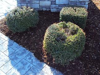 Inconsistent Pruning.JPG
