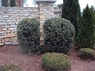 Bad Pruning 1.JPG