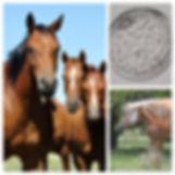 Equinos 2 - vertical.jpg