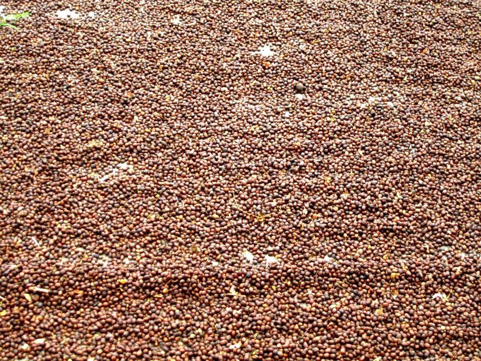 Joy Beans Organic Coffee Roasters