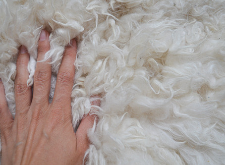 Is Alpaca Wool Soft? (And How Soft Is It?)