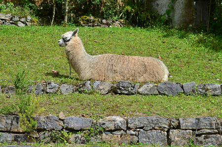 Is Alpaca Wool Itch-free?