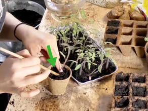Cultivando dentro de casa usando leds