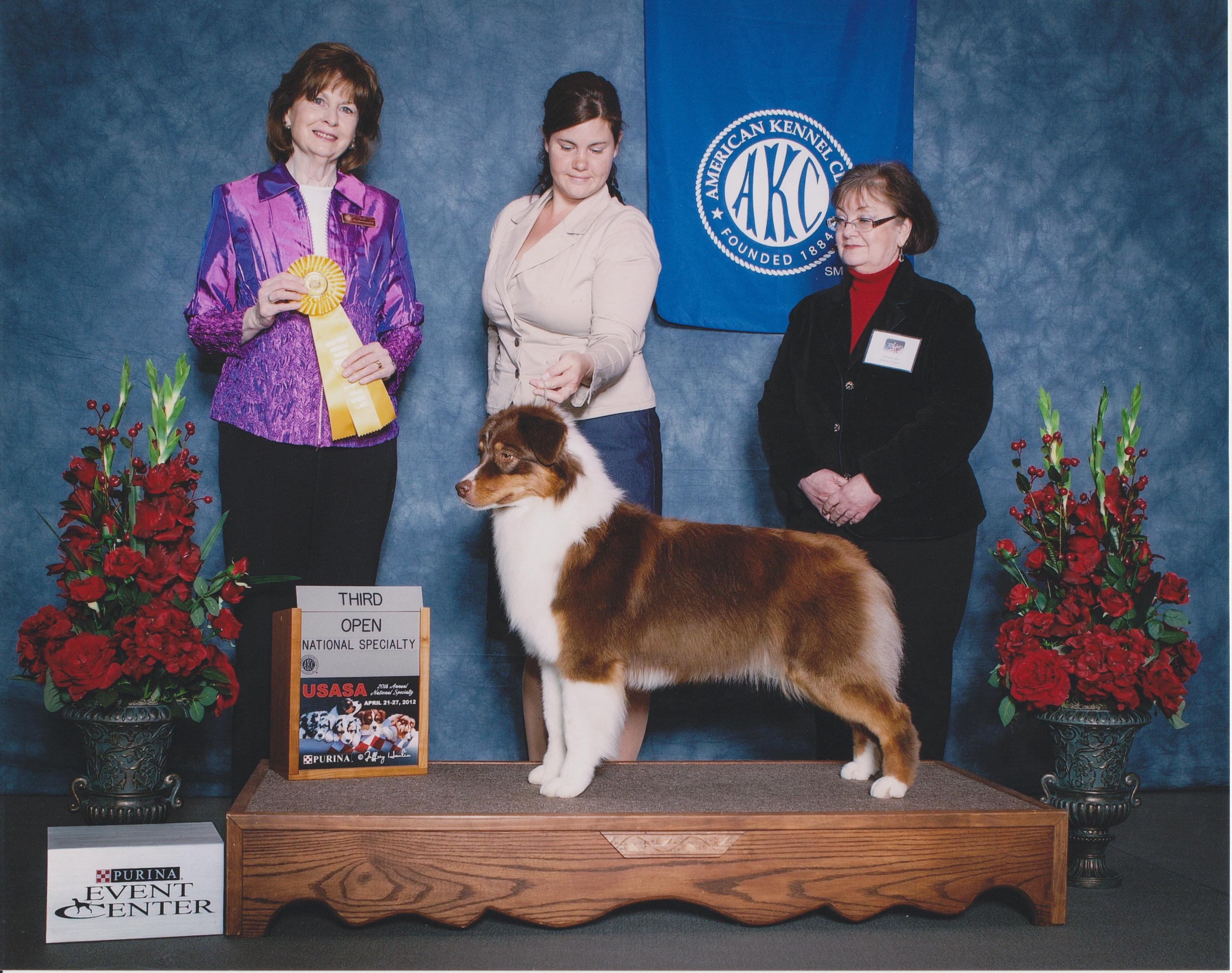 American Kennel Club Third Open 001