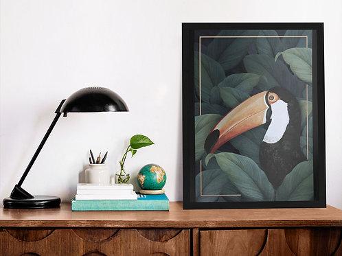Affiche Illustration toucan