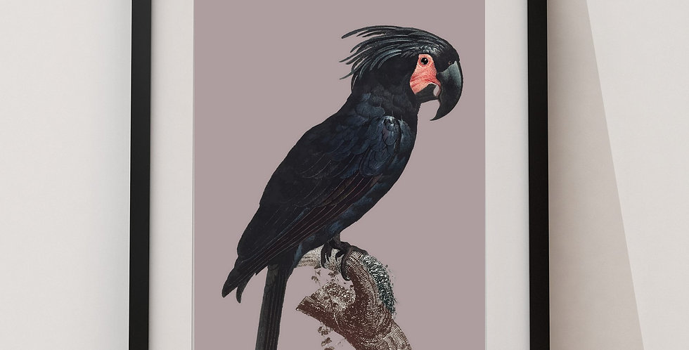 Affiche Perroquet 67