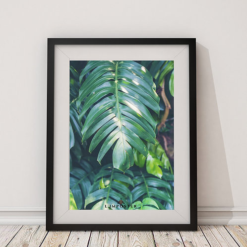 Affiche feuilles