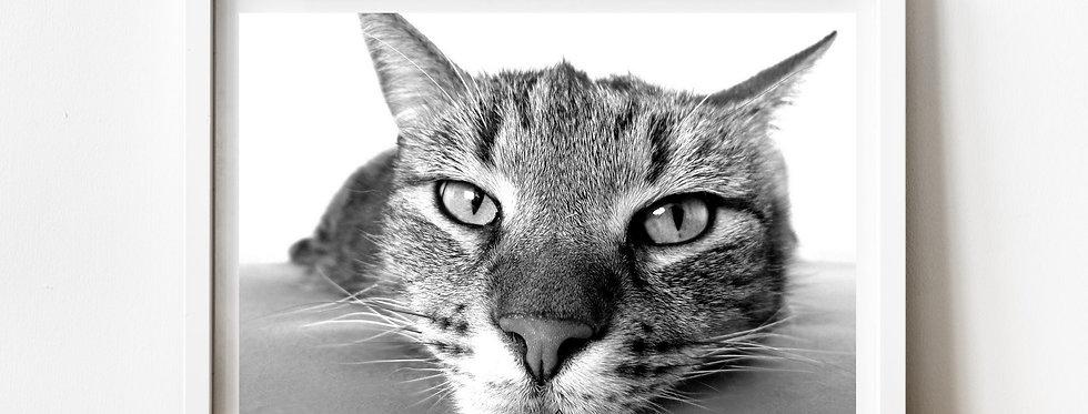 Affiche photo chat mignon 172