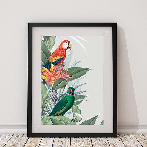 Affiche perroquet et oiseau vert