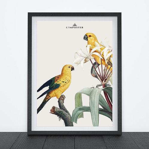 Affiche oiseaux jaunes sur leur branche