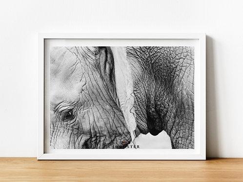 Affiche Photo d'un éléphant