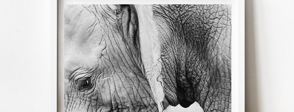 Affiche Photo d'un éléphant 224