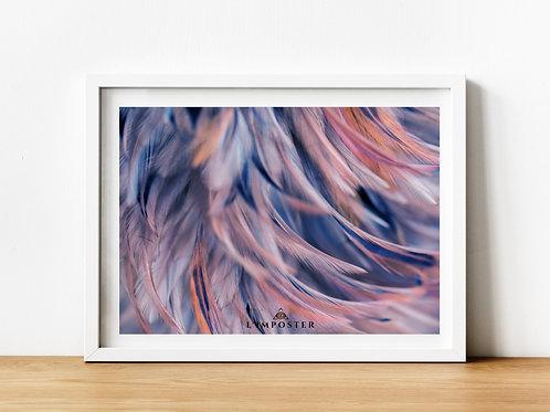 Affiche plumes couleur