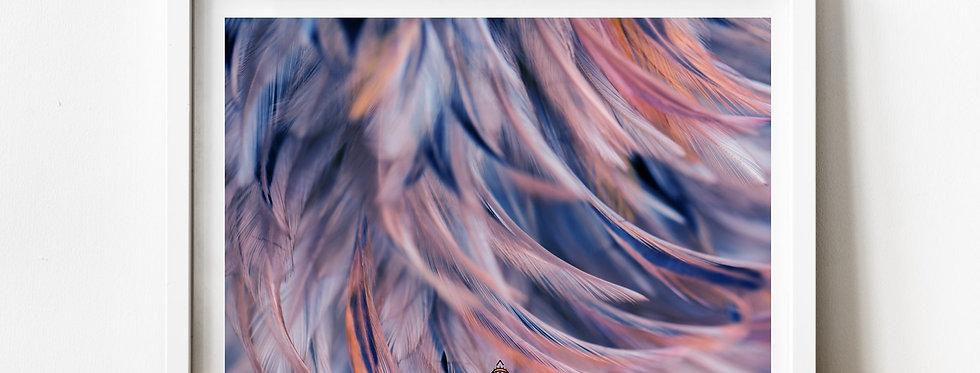 Affiche plumes couleur 161