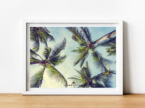 Affiche Palmiers