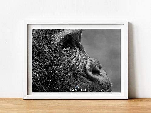 Affiche Photo d'un gorille de profil
