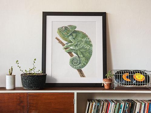 Affiche Illustration caméléon