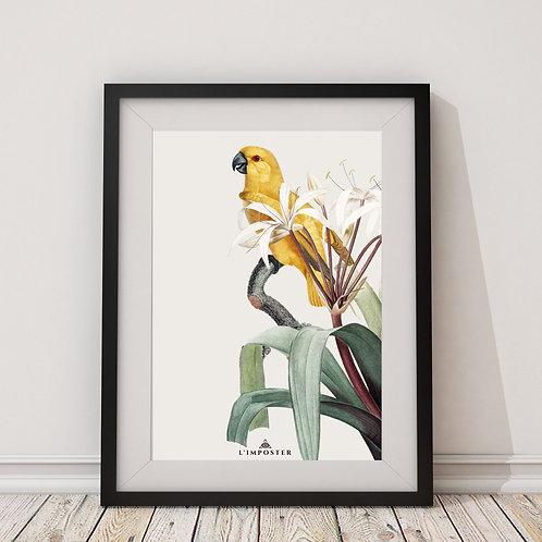 Affiche Oiseau jaune sur sa fleur