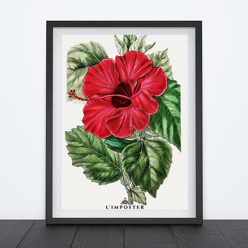 Affiche fleur rouge