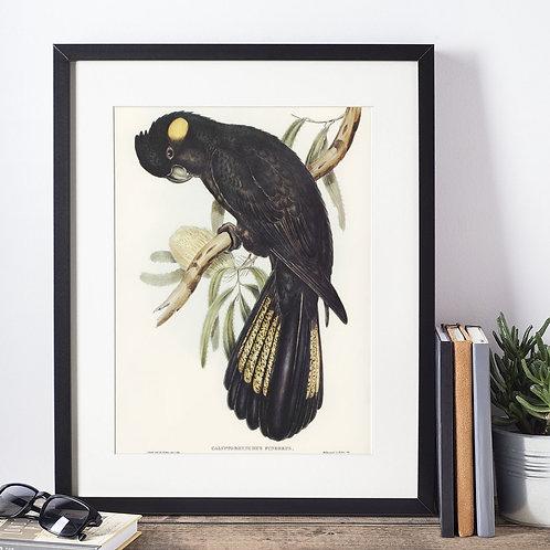 Affiche oiseau noir