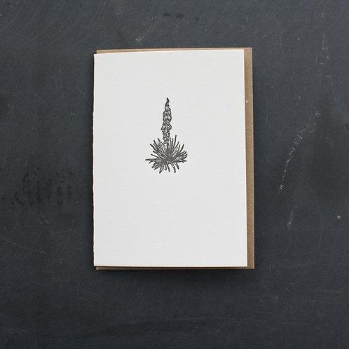 Yucca Card