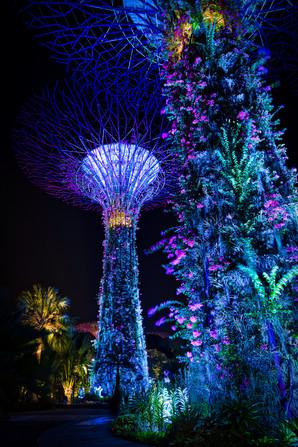 Singapore Supertree Nights
