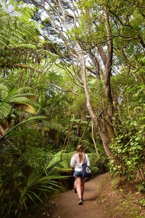 Piha walk, Nouvelle-Zélande