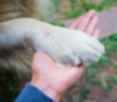 Dog%3Ahuman%20ahnd_edited.jpg