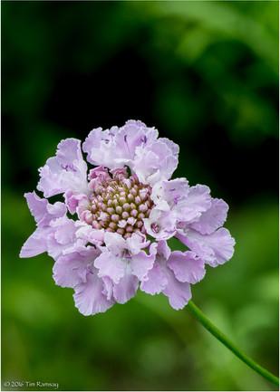 Hardwick Flora
