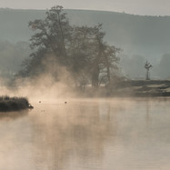 MELLOW MISTY MORNING by Martin Mosley.jpg
