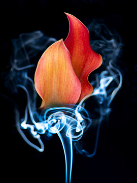 LILY ON FIRE