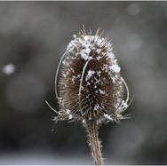 A HINT OF SNOW By Chris Briddon.jpg