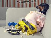 Fat Doxie Joke Picture - 11-17-20.jpg
