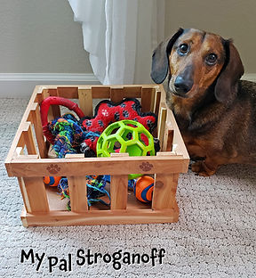 Stroganoff the doxie with his toys in toy box.