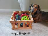 My Pal Stroganoff - Dachshund - With Toy