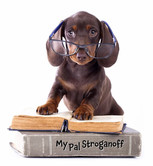 Doxie Puppy Reading with Glasses - 11-18