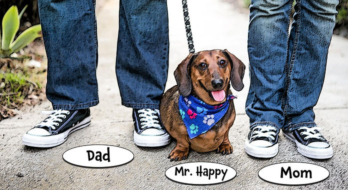 My Pal Stroganoff the Doxie with Mom and Dad